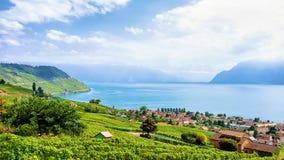 Сельская местность тропы террас виноградника Lavaux Швейцарии Стоковое Изображение RF