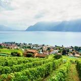 Сельская местность тропы Швейцарии террас виноградника Lavaux Стоковое Фото