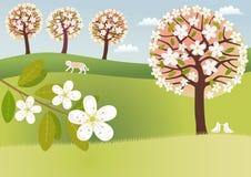 сельская местность цветения Стоковые Фото