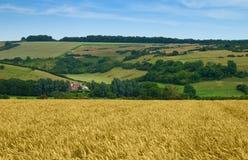 сельская местность dorset стоковая фотография rf