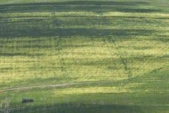 сельская местность fields зеленый цвет Стоковое фото RF