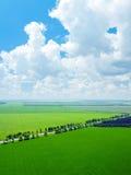сельская местность fields зеленый цвет Стоковое Фото