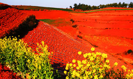 сельская местность fields красный цвет Стоковая Фотография RF