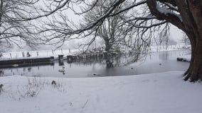 Сельская местность Snowy стоковые фотографии rf