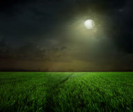 Сельская ноча с луной Стоковая Фотография