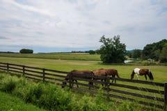 Сельская обрабатываемая земля York County Пенсильвании страны, на летний день Стоковые Изображения RF