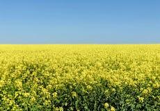 Сельская предпосылка поля с рапсом в яркой стоковое изображение rf