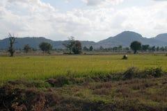 Сельская сцена нового урожая в засушливом сезоне стоковое изображение