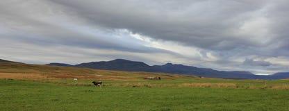 Сельская сцена около Saudarkrokur, Исландии Стоковое Фото