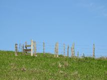 Сельская сцена: пустое приложение скотин в травянистом поле стоковые изображения