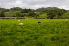 Сельская ферма в английской сельской местности стоковые изображения rf