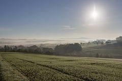 Сельские ветротурбины холма леса деревьев утра тумана тумана ландшафта Стоковая Фотография RF