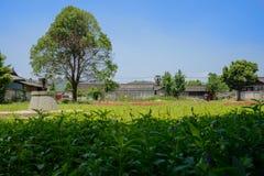 Сельские плитк-настелинные крышу дома за цветя полем в солнечном лете Стоковые Изображения RF