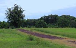 Сельские сельскохозяйственные угодья делают красивую панораму стоковое фото