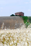 сельский дом fields овес Стоковые Фотографии RF