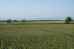 Сельский ландшафт вдоль пути цикла Po Стоковое Изображение RF