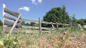 Сельский ландшафт - загородка, ворота, деревья сток-видео