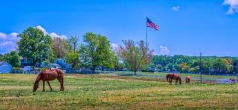 Сельский ландшафт конюшни лошади Мэриленда с американским флагом Стоковые Изображения