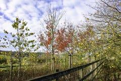 Сельский пейзаж осени на сельской местности Стаффордшира стоковое изображение