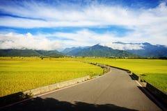 Сельский пейзаж с золотой фермой неочищенных рисов на Luye, Taitung, Тайване стоковая фотография rf