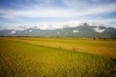 Сельский пейзаж с золотой фермой неочищенных рисов на Luye, Taitung, Тайване стоковое фото