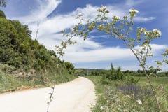 Сельский путь на весенний день и завод с цветками на переднем плане на Вейл de Figueira Стоковые Фотографии RF