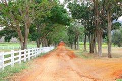 Сельский путь почвы к лесу лета стоковые изображения