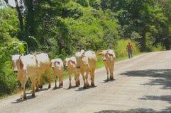 Сельский район Guanacaste Коста-Рика Стоковое фото RF