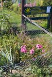 сельский сад коттеджа в горячем летнем дне garte в июле и письмах Стоковые Изображения RF