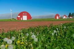 Сельский склад картошки Острова Принца Эдуарда Стоковые Фото