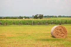 Сельское аграрное место Стоковая Фотография RF