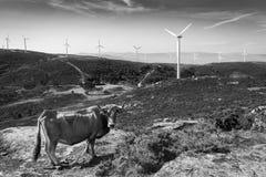 Сельское животное сцены дома ваша ферма ландшафта Стоковая Фотография