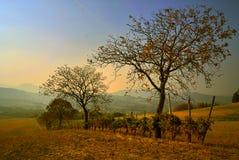 сельское ландшафта рисуночное Стоковые Изображения RF