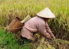 сельское место Вьетнам Стоковое Фото