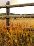 Сельское место осени Стоковые Фото