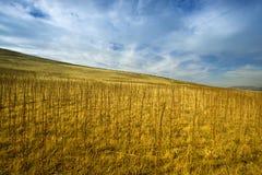 сельское место Стоковые Фотографии RF