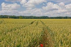 Сельское поле во Франции стоковые изображения rf