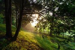 Сельское утро Теннесси Стоковые Изображения RF