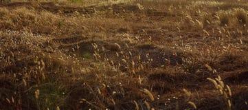 Сельское флористическое поле на заходе солнца лето предпосылки естественное Стоковые Фотографии RF