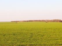 Сельскохозяйственная техника проводит работу на местах стоковая фотография rf