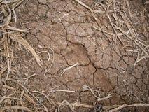 Сельскохозяйственне угодье в засухе Стоковые Изображения RF