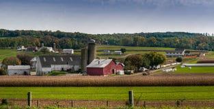 сельскохозяйственне угодье Пенсильвания Стоковое фото RF