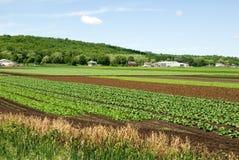 сельскохозяйственне угодье плодородное Стоковое Фото