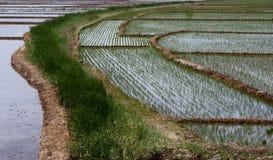 сельскохозяйственне угодье Стоковая Фотография