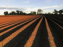 сельскохозяйственне угодье Стоковые Изображения
