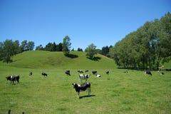 сельскохозяйственне угодье Стоковое Фото