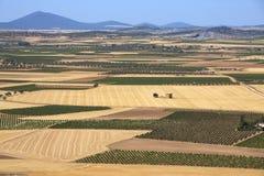 Сельскохозяйственне угодье Mancha La & виноградники - Испания Стоковая Фотография RF