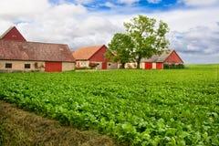 сельскохозяйственне угодье яркое Стоковое Изображение RF