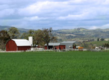 сельскохозяйственне угодье Стоковое Изображение