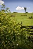 сельскохозяйственное угодье пастырское Стоковое фото RF